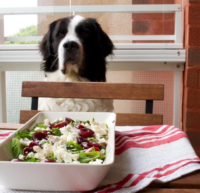 Kuvassa myös koirajaoston ylitarkastaja ihmettelemässä, kun ruokaa kanniskellaan edestakaisin.